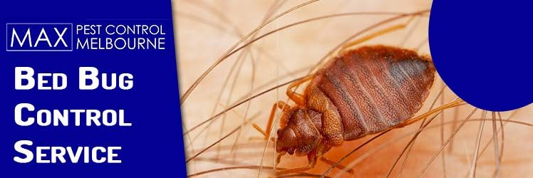 Bed Bugs Can Be Your Worst Nightmare