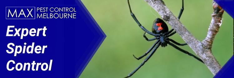 Expert Spider Control