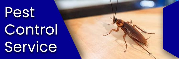 Pest Control Services Provider – Safe, Effective & Long lasting