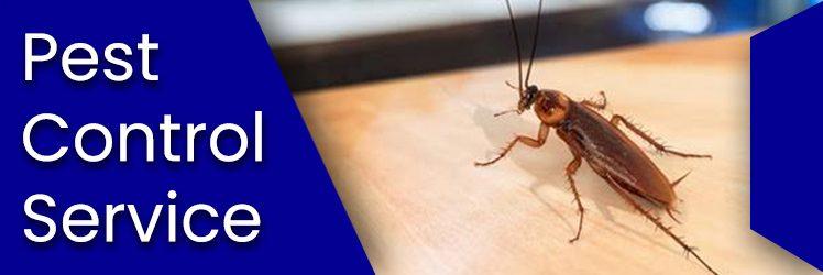 Pest Control Services Provider – Safe, Effective & Long lasting