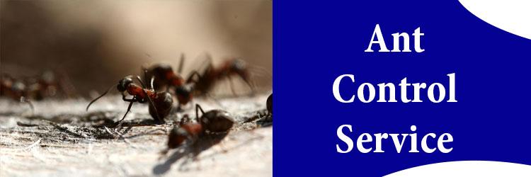 Ants Control Melbourne