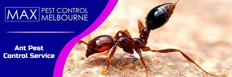 5 Pests you Cannot Ignore at All