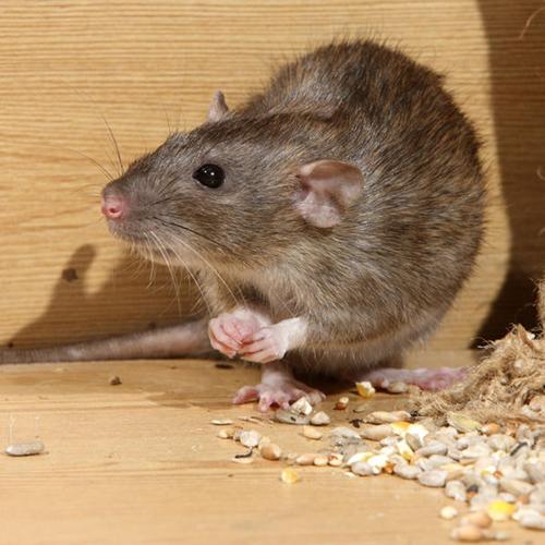 Mouse Control Service