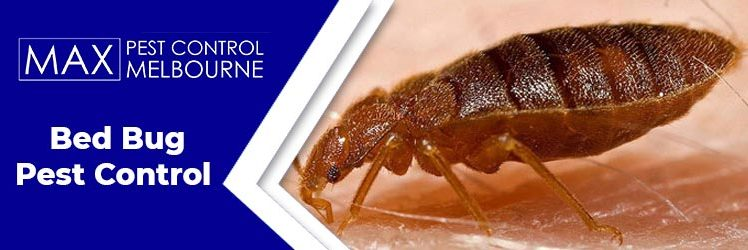 Let's Beat The Bed Bug Menace